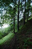 Wildnissgebiet Dürrenstein