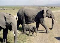 Amboseli-Nationalpark